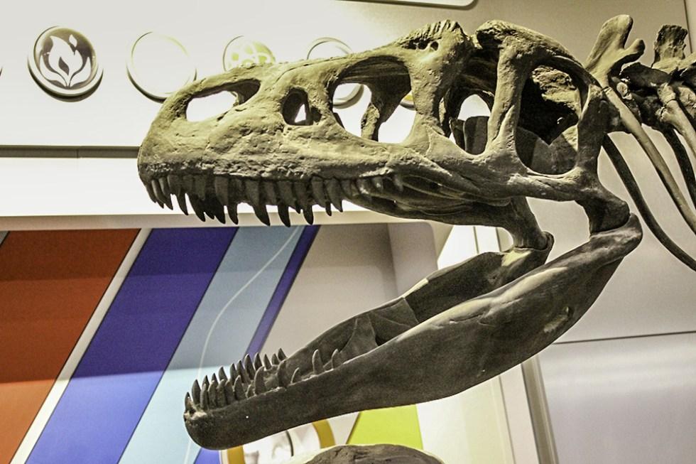 dinosaur-bones-at-mosh