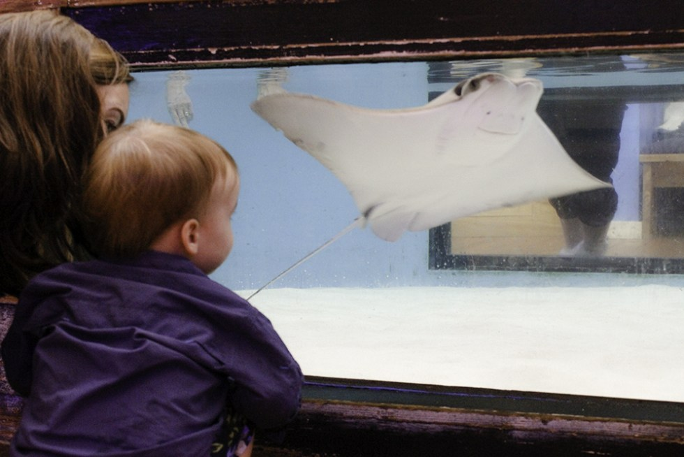 Jackson watching the sting ray at the Marine Science Center in Ponce Inlet