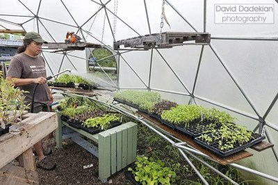 Bleu Grijalva watering the plants inside one of New Urban Farmers' geodesic domes