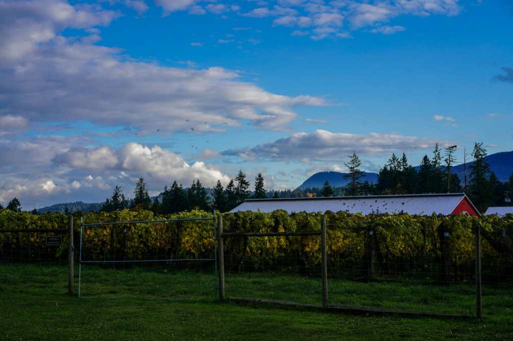 Unsworth Vineyards in Cowichan, BC