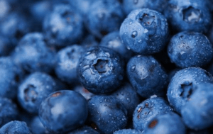 blueberries close