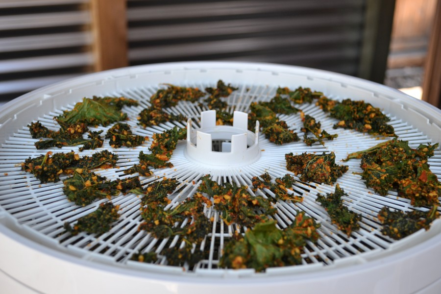 Kale Chips in the Dehydrator