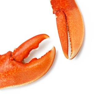 Fresh Seafood Online Link