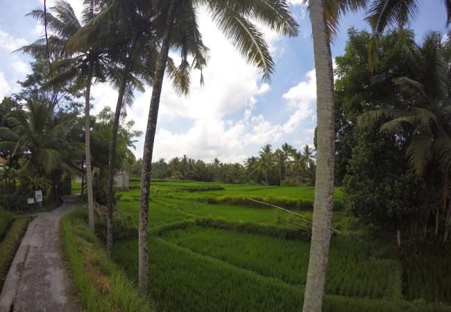 Isla de Bali · Ubud