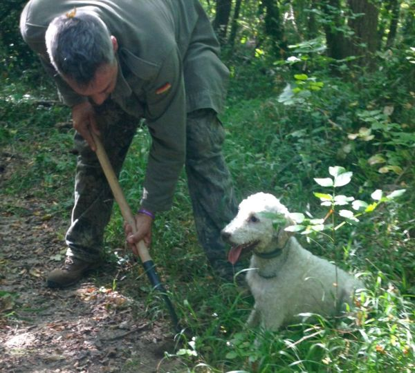 Stella the truffle dog sniffs out the truffles, then waits patiently