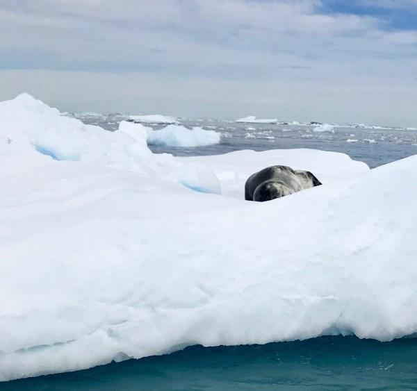 Antarctica: Leopard seal