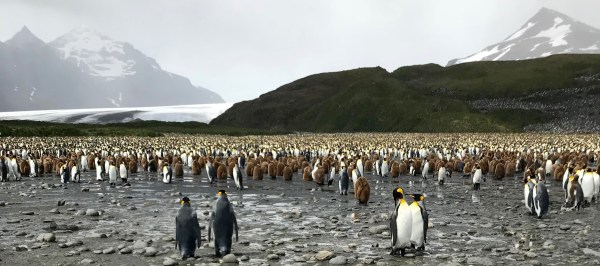 South Georgia: penguins and glacier