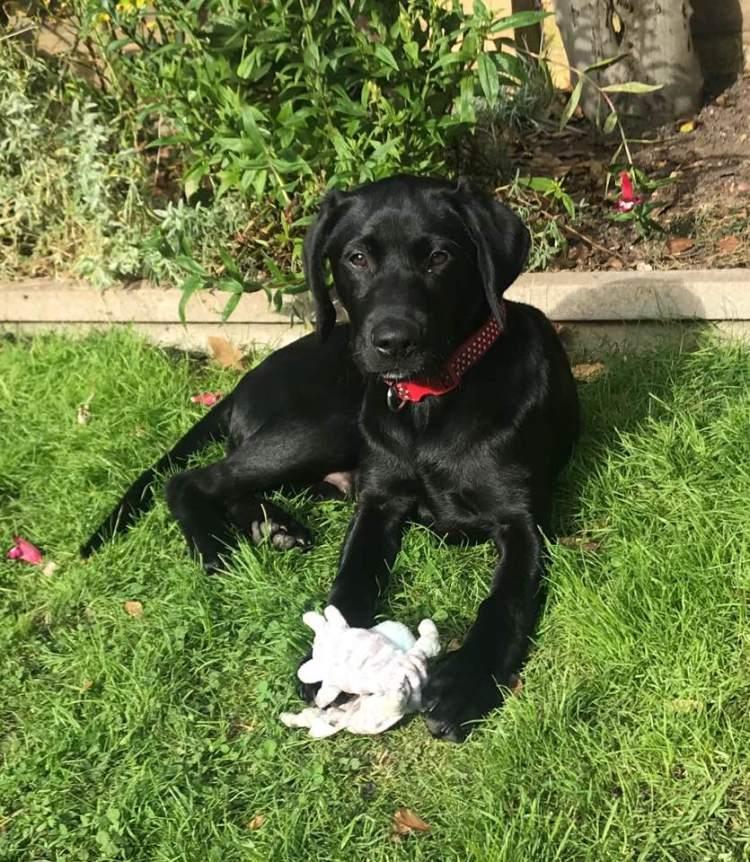 Dog Buddy: Frank