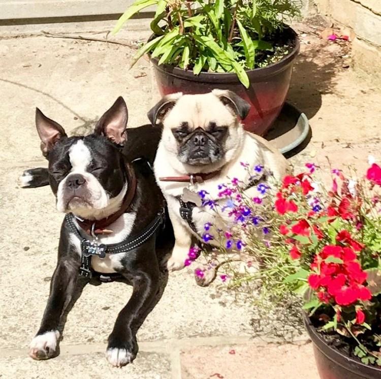 Dog Buddy: Tilly and Enya