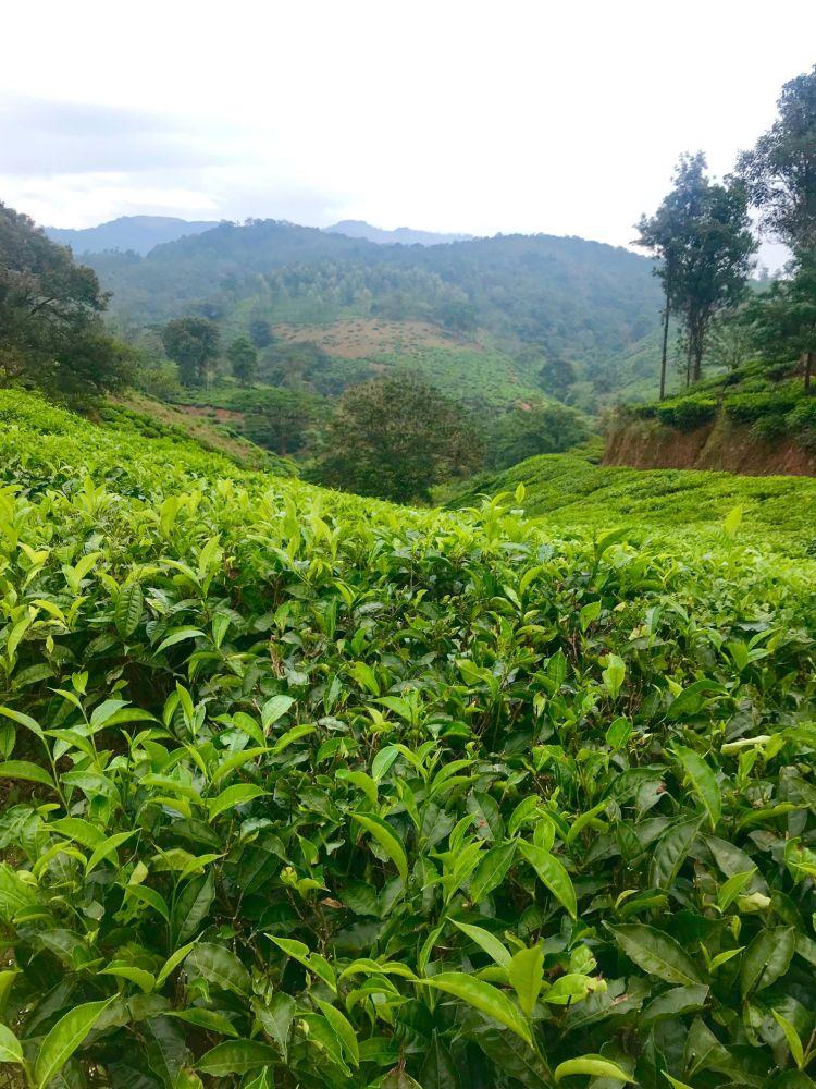 Kerala: Wyanad