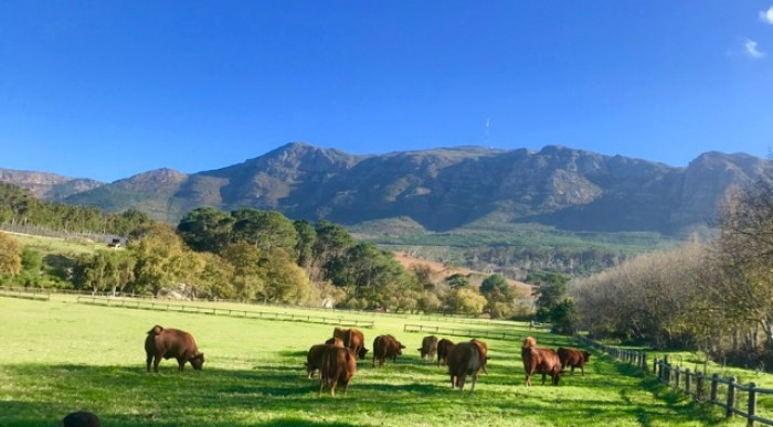 Buitenverwachting: cows