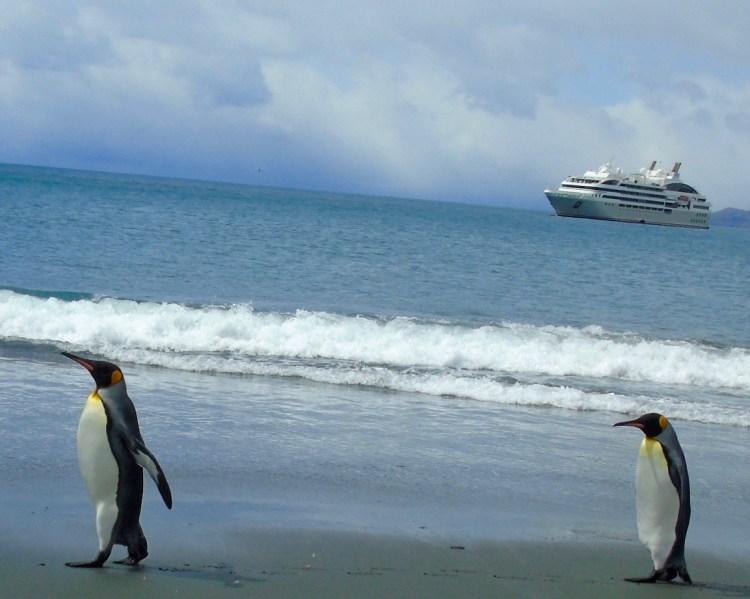 Waddle: king penguins