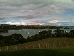 The view from the top of Goldie Vineyard