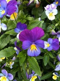 Mark's pics from Parnell Rose Gardens 059