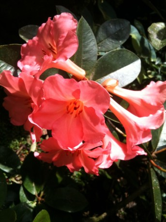 Mark's pics from Parnell Rose Gardens 061