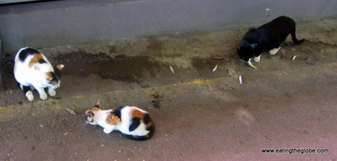 Cats of Chania Market eating fish