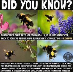 BumblebeesLevitateMeme