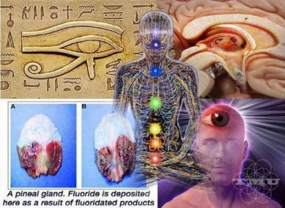 EffectsOfFluorideOnPineal