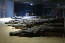 961px-The_Crocodile_Museum_0283_d1