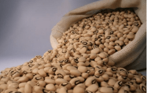Sliced chocolate bean
