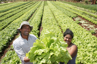 Fazenda 2.0 – 5 tecnologias para revolucionar a agricultura