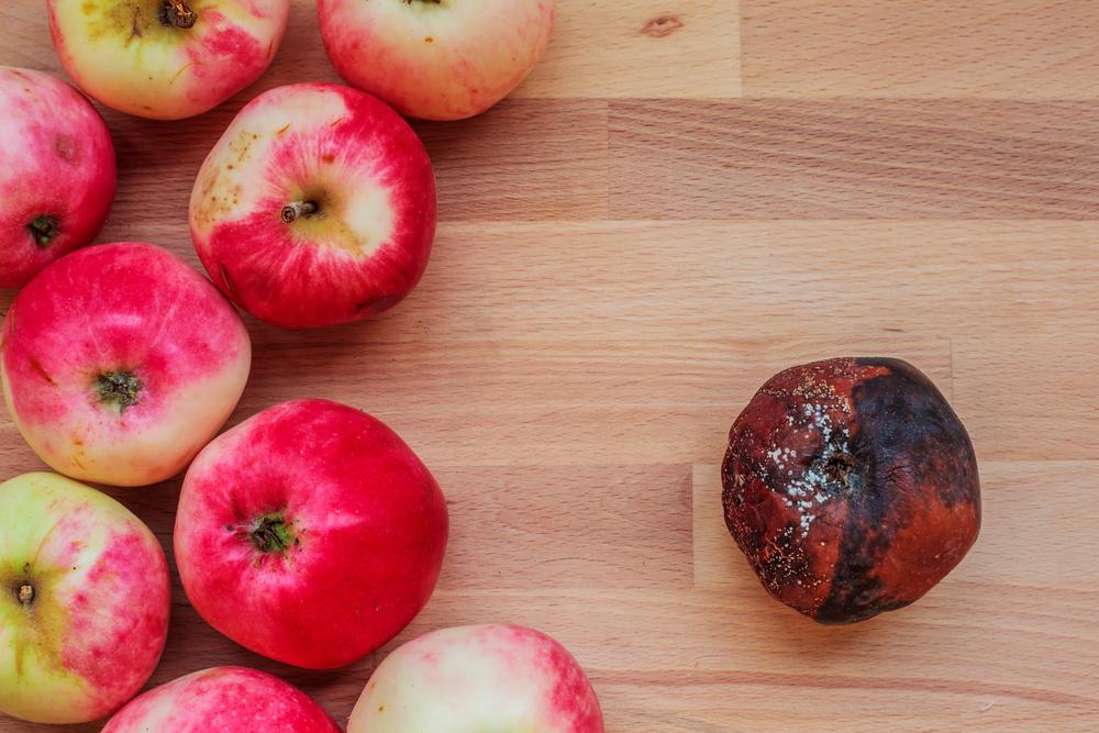 Startup cria fórmula para frutas sem agrotóxicos durarem 5x mais tempo