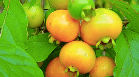 Fruits: the strength in curing diseases