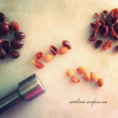 removing the apricot almonds from the seed