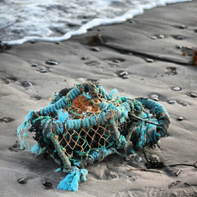 A washed up lobster pot