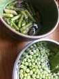 peas & aspargus