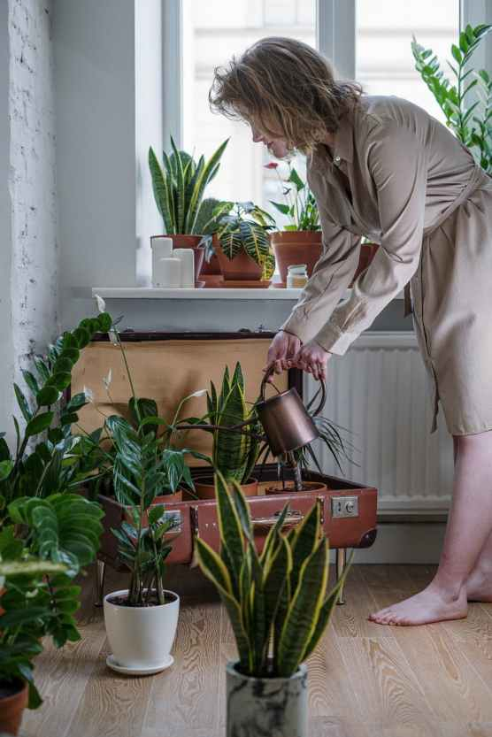 photo of woman watering her plants