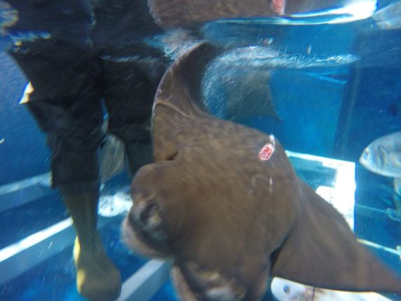 Feed the stingrays at the Dubai Aquarium