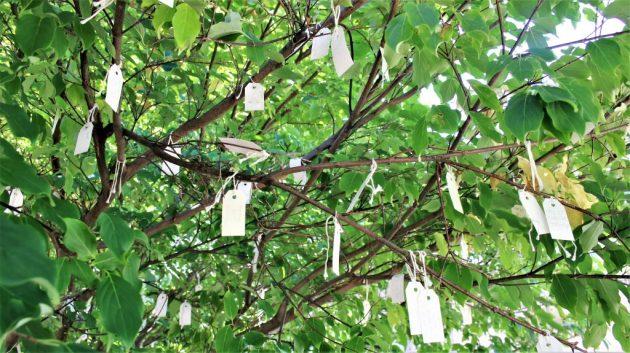 Wish Tree for Washington