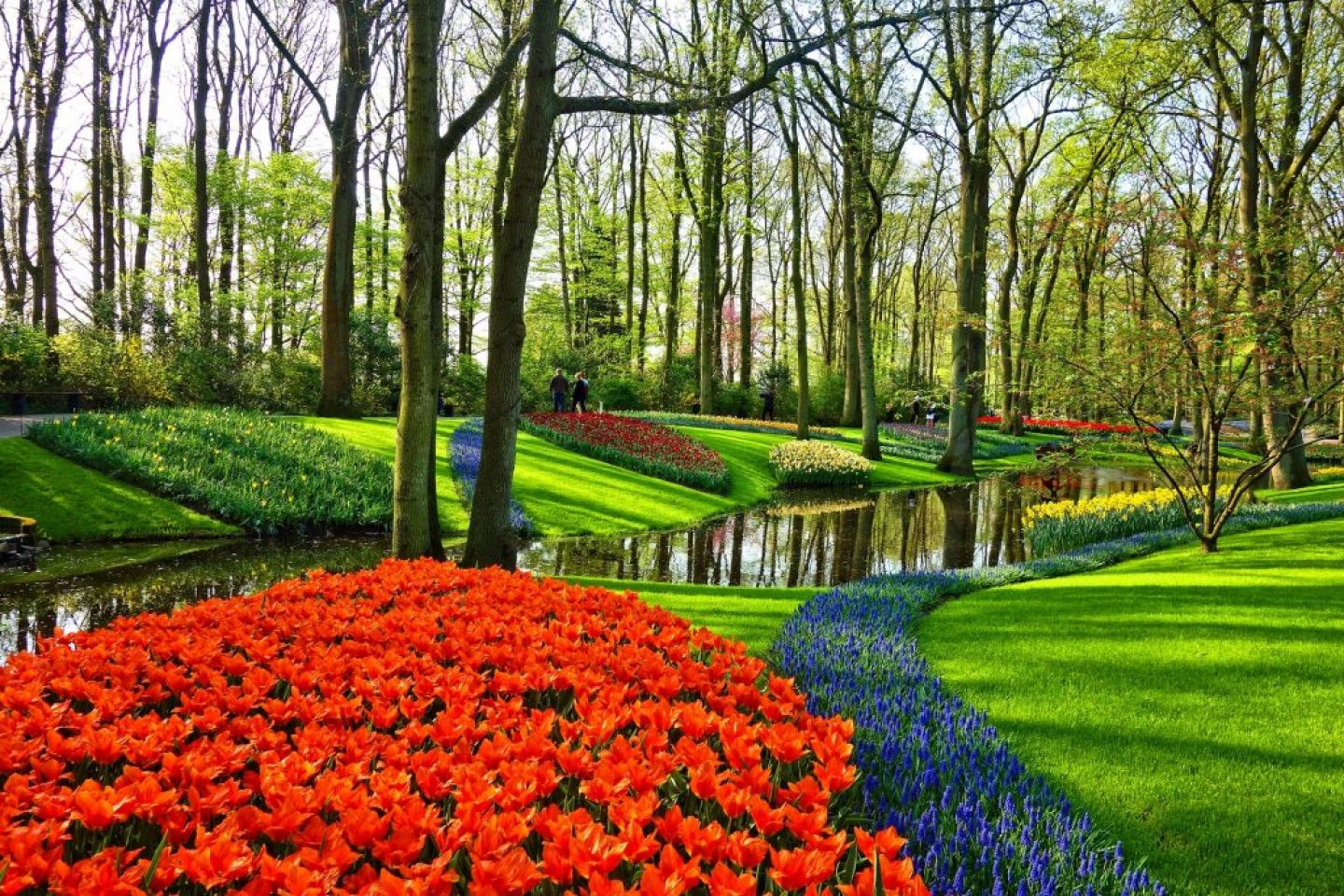 European Bucket List destination, the Natherlands. Keukenhof.