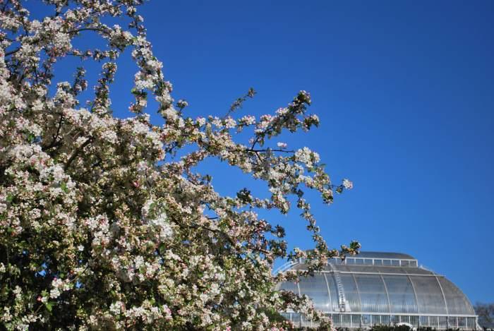 spring flowers at kew gardens
