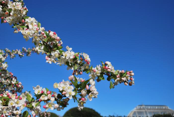 springtime at kew gardens