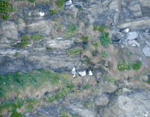 Northern Fulmar were nesting on the cliffs.