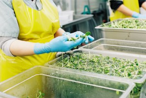 Food Safety at Eat More Sprouts