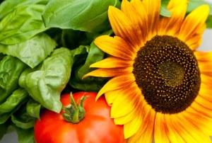 Eat more Gardens