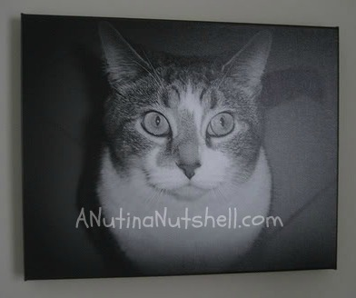 A cat sitting in front of a television screen