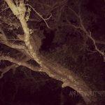 spooky-tree-cemetery-night
