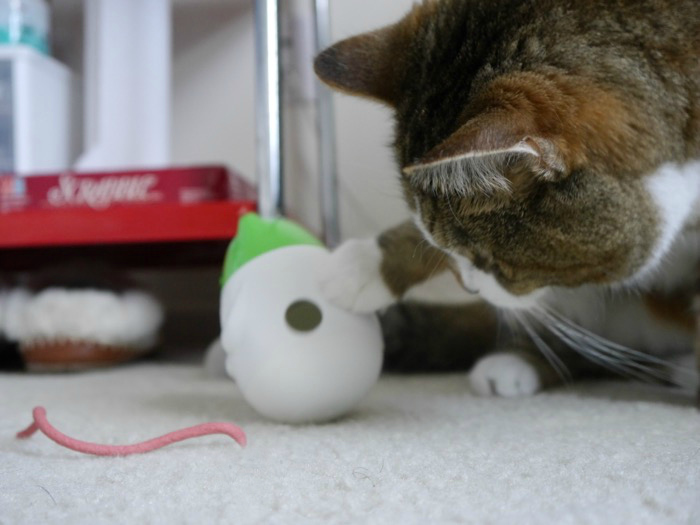 Friskies Pull n Play Wobbert Action Shot