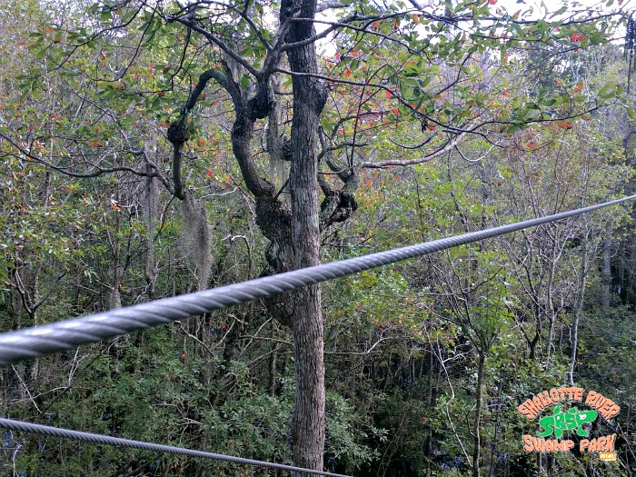 natural setting - Shallotte River Swamp Park