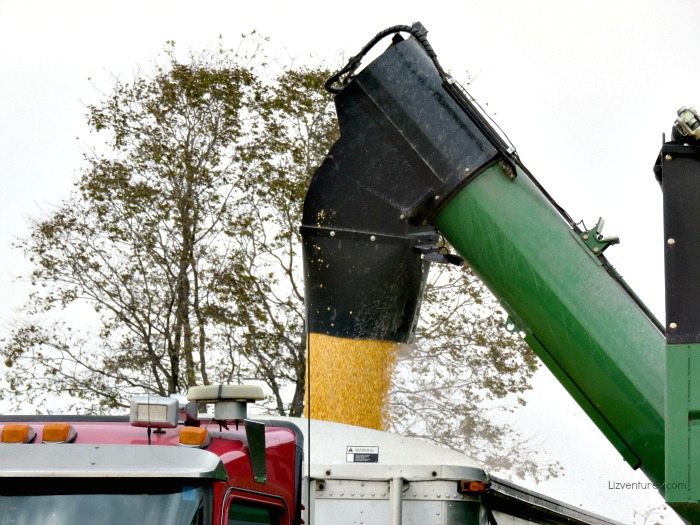 transferring harvested field corn from holding tank to truck