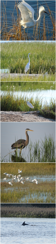 animals of the salt marsh - NCBI