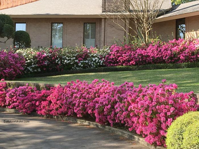 Azalea and Spring Flower Trail in Tyler Texas