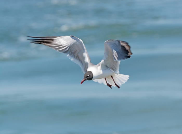 seagull in The Outer Banks North Carolina