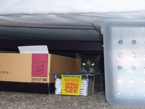 Mony hiding