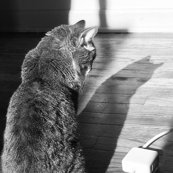Mony shadow