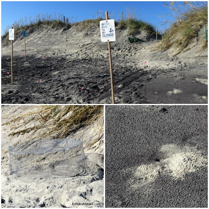sea turtle nesting site - Pea Island Wildlife Refuge